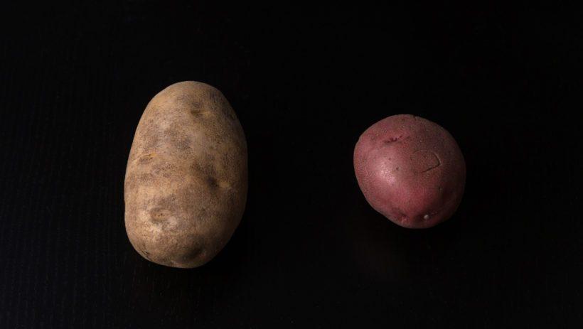 Easy Creamy Instant Pot Potato Salad Recipe (Pressure Cooker Potato Salad): russet potatoes vs red potatoes